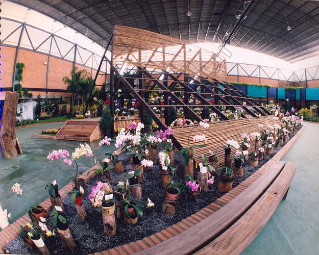 Pedro Holderbaum Festa das Flores Joinville 13 cópia