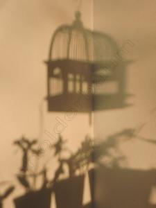 01 Shadow - Joinville Brasil DSCN8491