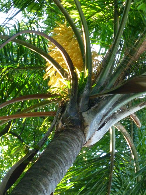 ypedro-holderbaum-porto-alegre-colors-6-cc3b3pia