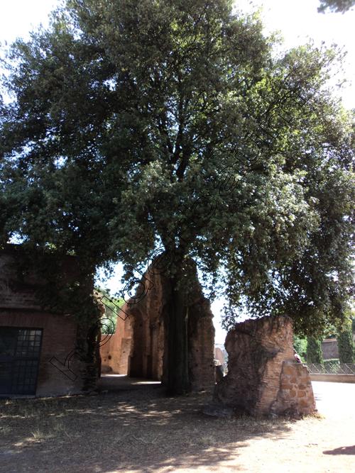zpedro-holderbaum-palatino-roma-15-cc3b3pia