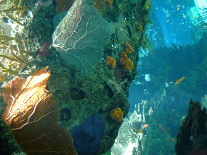 pedro-holderbaum-oceanario-11-cc3b3pia