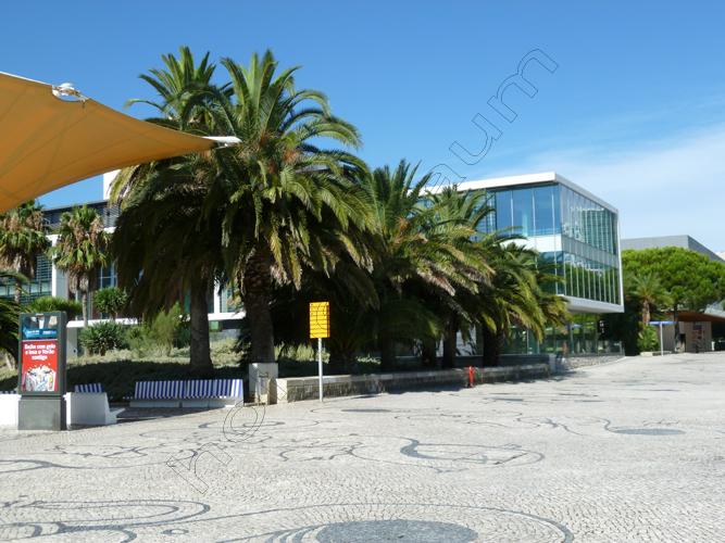 pedro-holderbaum-oceanario-de-lisboa-beauty-4-cc3b3pia