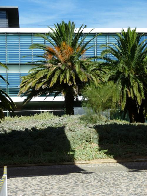 pedro-holderbaum-oceanario-de-lisboa-beauty-2-cc3b3pia
