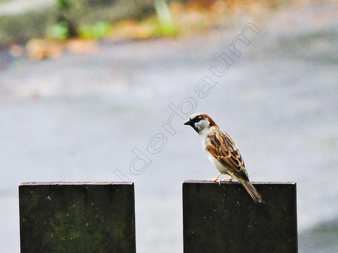 a7 Sparrow