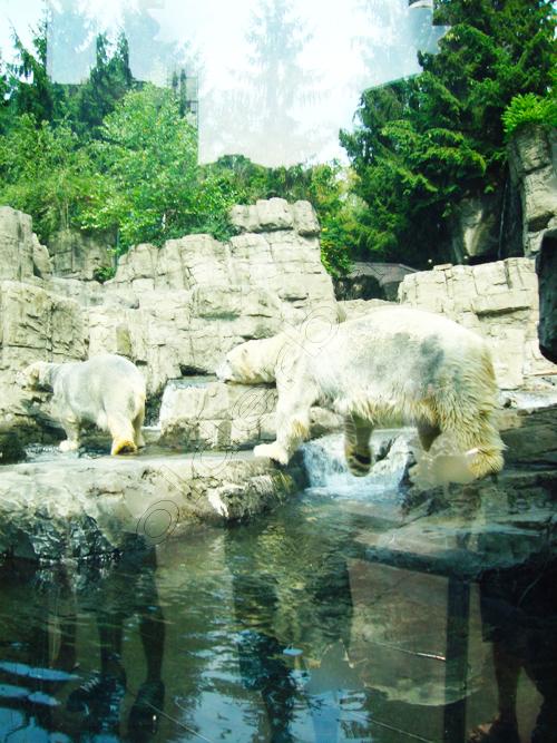 zoo-8-cc3b3pia