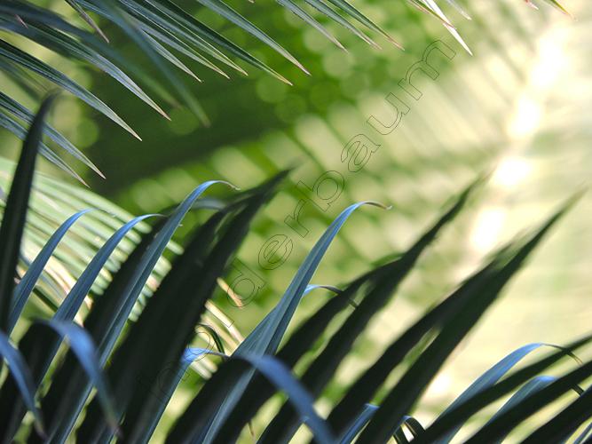 gpalmaceas-2-joinville-brasil.jpg