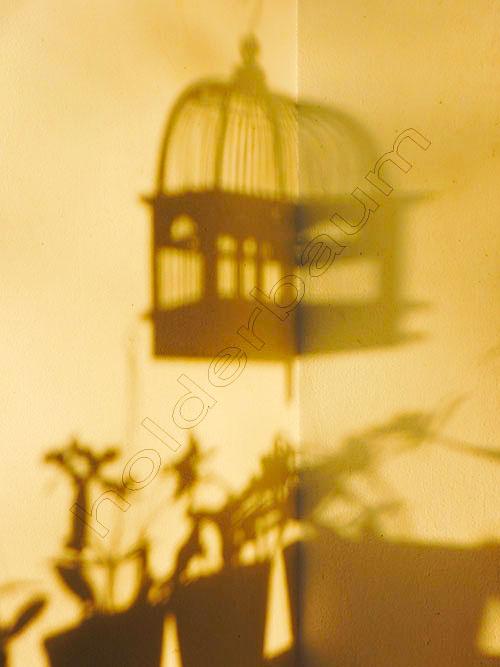 01-shadow-joinville-brasil-dscn8491