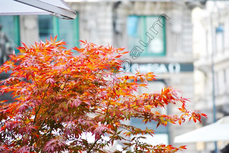 pedro-holderbaum-color-wien-2-cc3b3pia